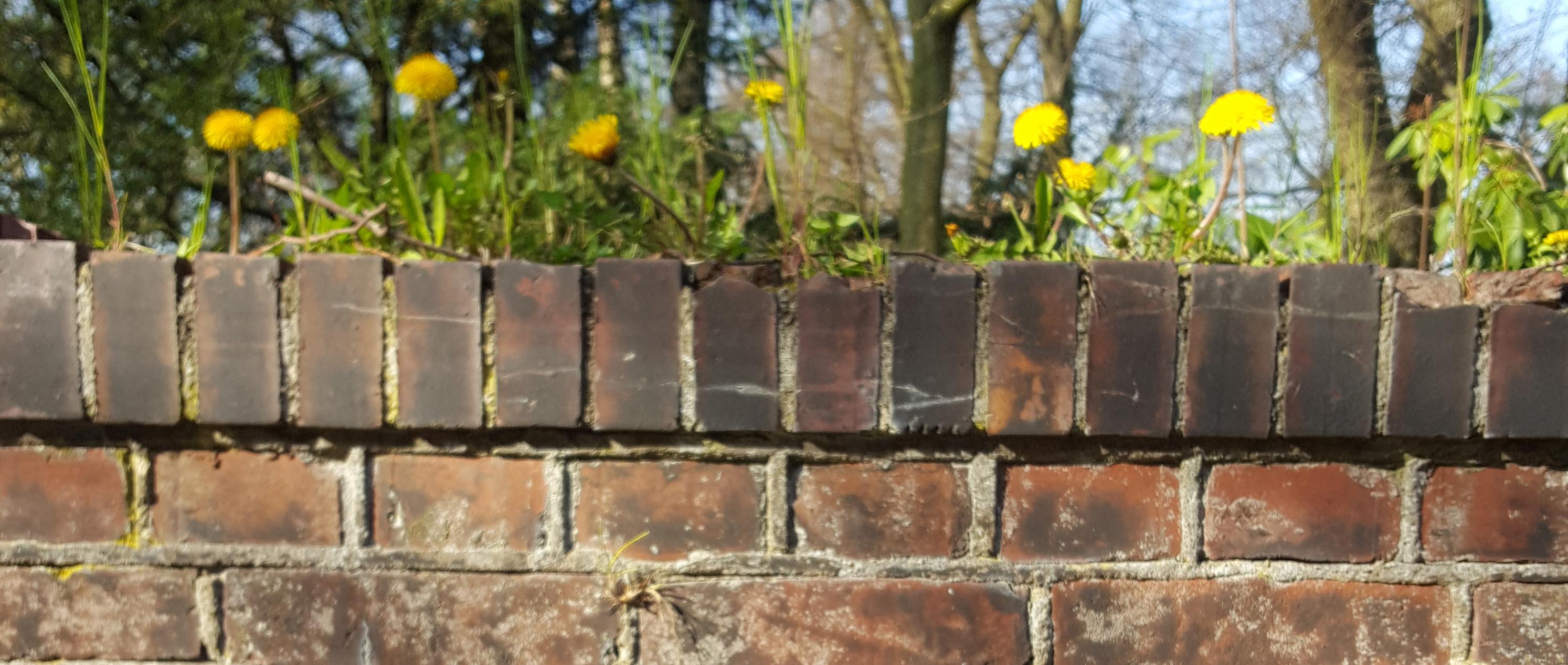 Mauer Blumen